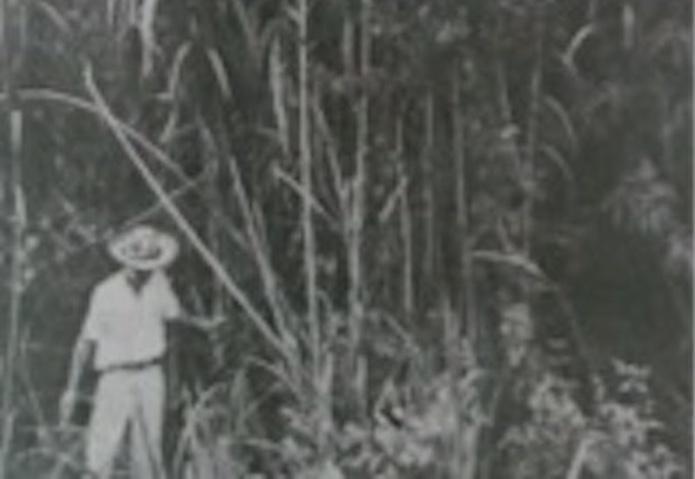 DESCOLONIZAR EL PARAÍSO: MARÍA, DE JORGE ISAACS Y LA INMIGRACIÓN JAPONESA AL VALLE DEL CAUCA. SEBASTIÁN DÍAZ MARTÍNEZ